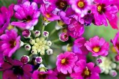 なんというお花でしょうか?