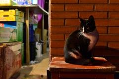 スリスリ猫