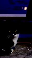 スリスリ猫2