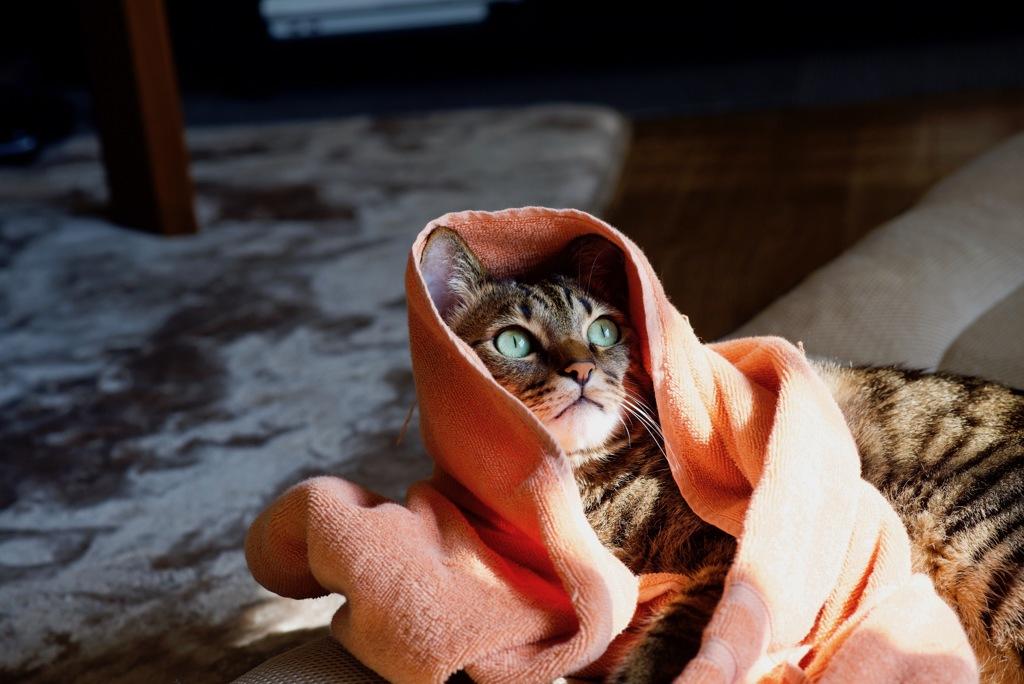 猫も衣替え