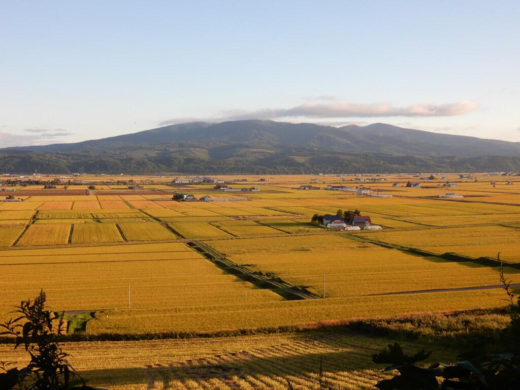 黄金色の風景