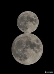 月だるま!