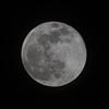 4月の満月、pink moon。