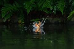 水浴びからの飛び出し(1)