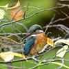 落ち葉と翡翠