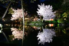 桜満開、古都金沢_08