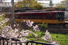 春の日や サクラと電車 撮りたくて