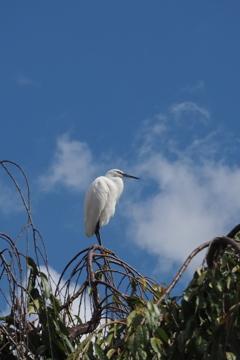 舞い降りた 白さぎ映えし 空の青