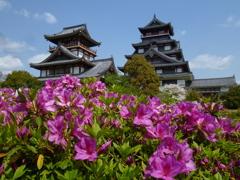 ツツジ咲く 初夏の陽射しや 伏見城