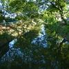 懐かしや 川面クスノキ 散歩道