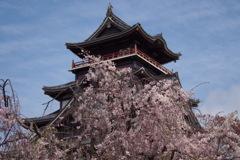 お城には 枝垂れ桜が よく似合い