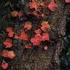 晩秋や 蔦の紅さに もの思ふ
