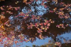 空の青 水面写りて 紅葉狩り