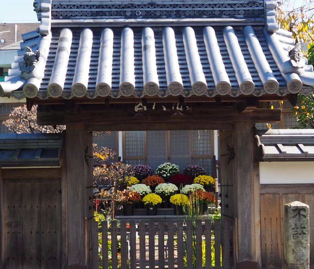 門の中 菊の鉢植え お出迎え