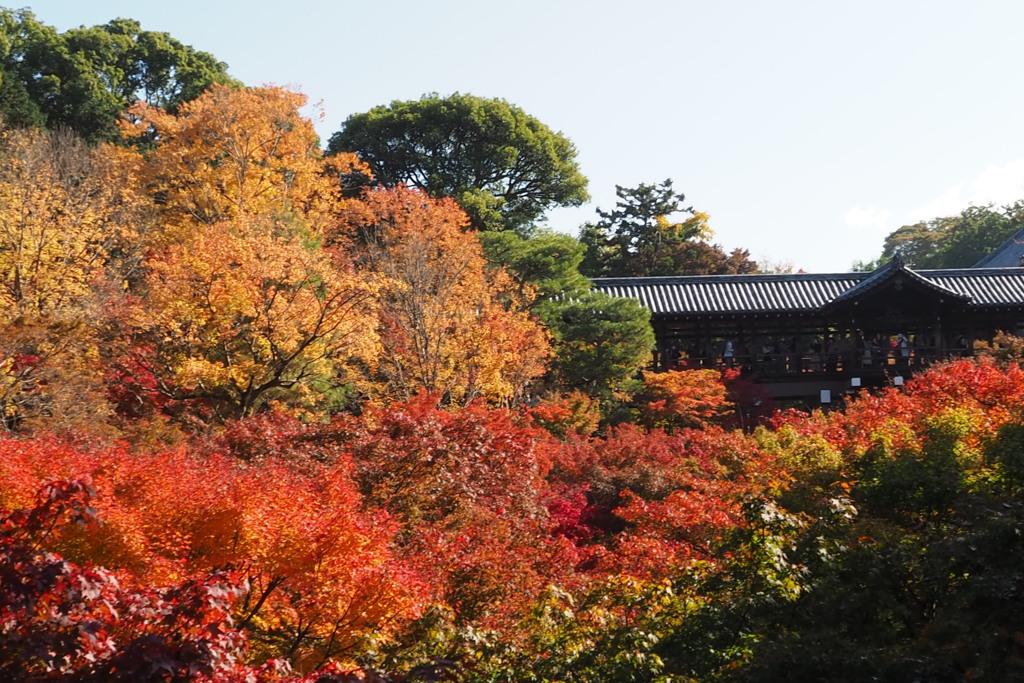 秋盛り 通天橋は 色の波