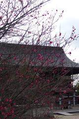 人気ない 神社彩る 紅梅よ