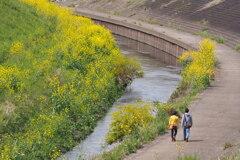 春の日の 川沿いウォーク ここちよし