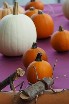 ハロウィンや かぼちゃに虫も 忍び寄り