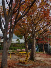 晩秋や キリン見上げる 落葉樹