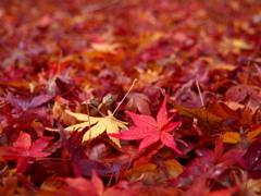 時移る 赤と黄色の 落ち葉かな