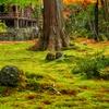 苔むす庭園