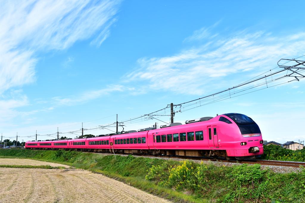 ピンクの弾丸列車