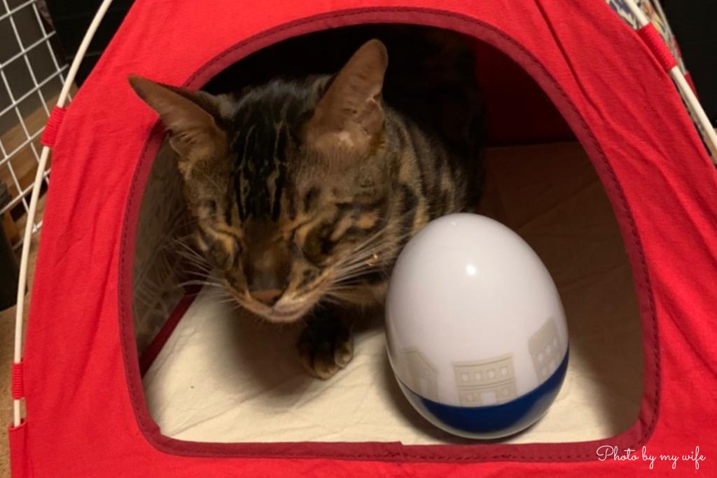 テントの猫