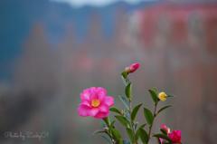 花言葉は「永遠の愛」