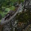 森の木の古傷(痛みを感じる植物)