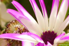 種から花、花から種へ