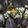 花とみどりと戯れる小鳥に癒されて