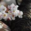 Flowers and stem bark
