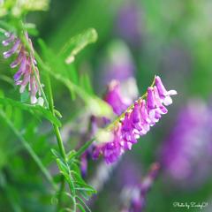 淡いむらさきの花