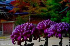 絵の具のような秋の色