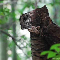 森の美味しい空気