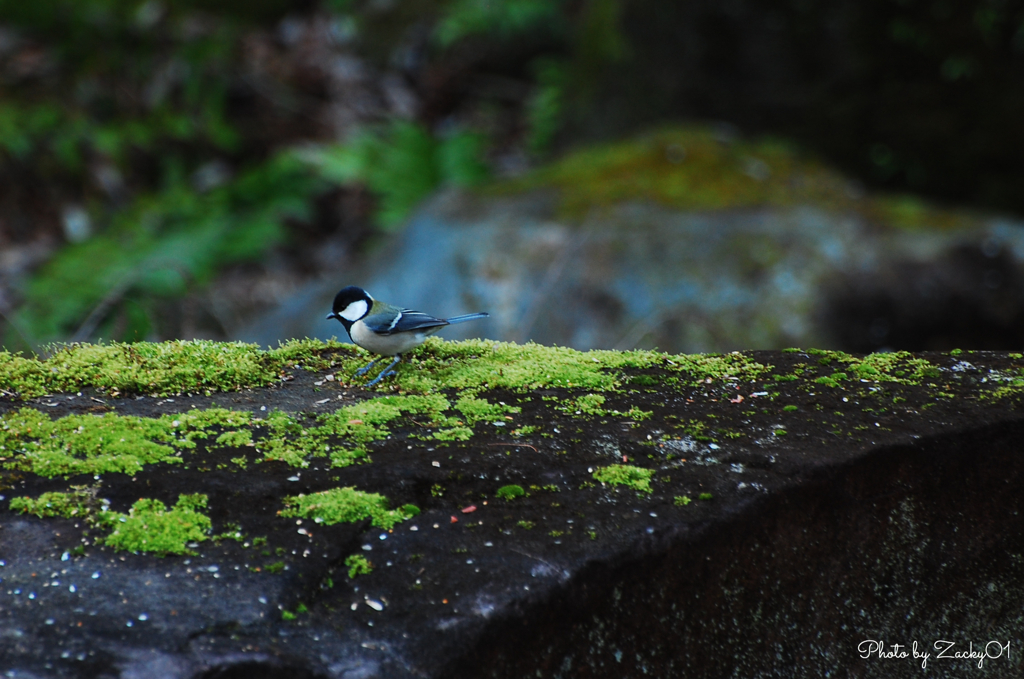 日本庭園がお好き