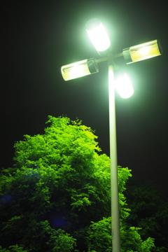 夜でも光合成