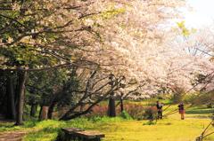 来年もまた、桜の季節に会いましょう