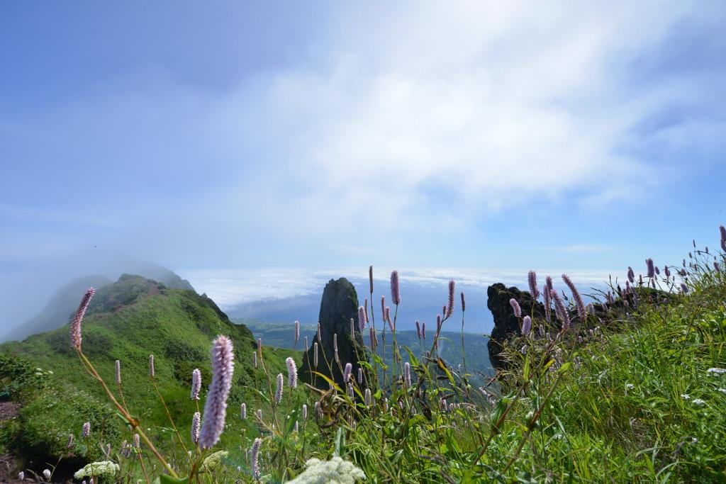 利尻山山頂の植物