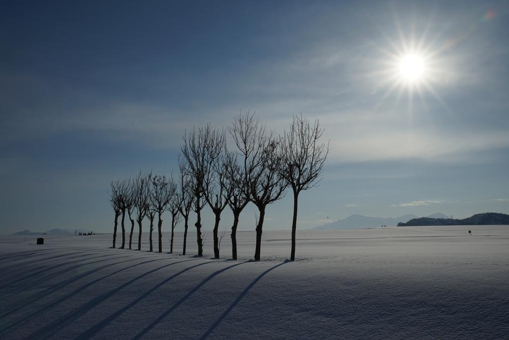 雪原の稲架木