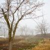 雪と桜と水芭蕉