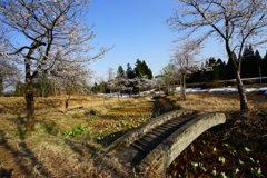 桜 水芭蕉 残雪