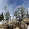黒斑山山頂付近の霧氷地帯