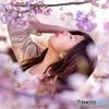夕刻の桜と。
