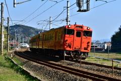 タラコ電車