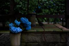 青色と井戸