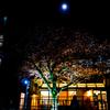朧月 見上げるあなたに treeを添えて