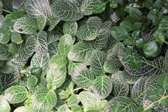 温帯に生息する植物の葉
