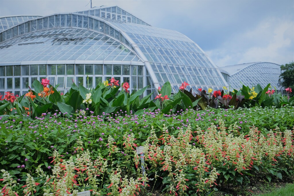 夏の京都府立植物園