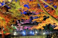 植物園 ライトアップ